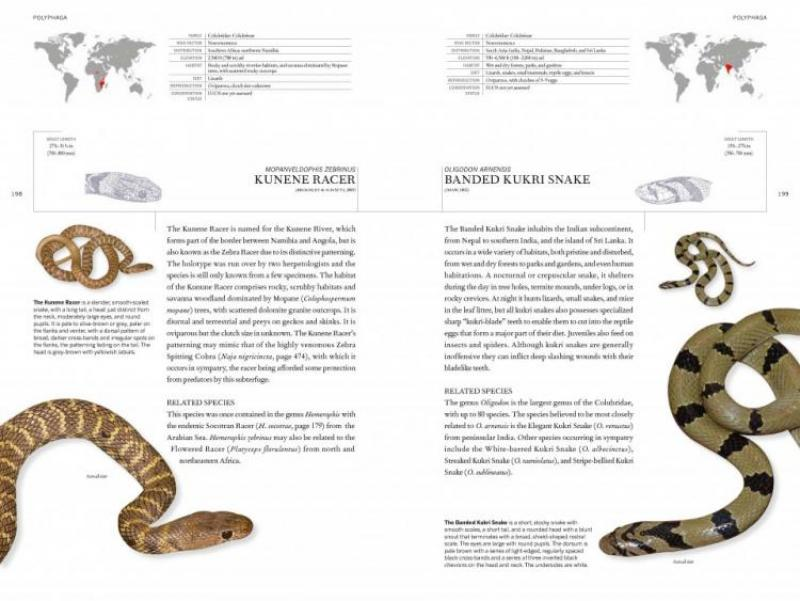 The Book of Snakes: A Lifesize Guide to Six Hundred Species from Around the World