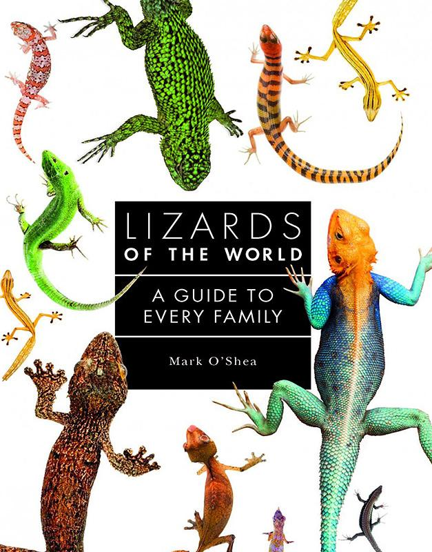 Lizards of the World A Guide to Every Family