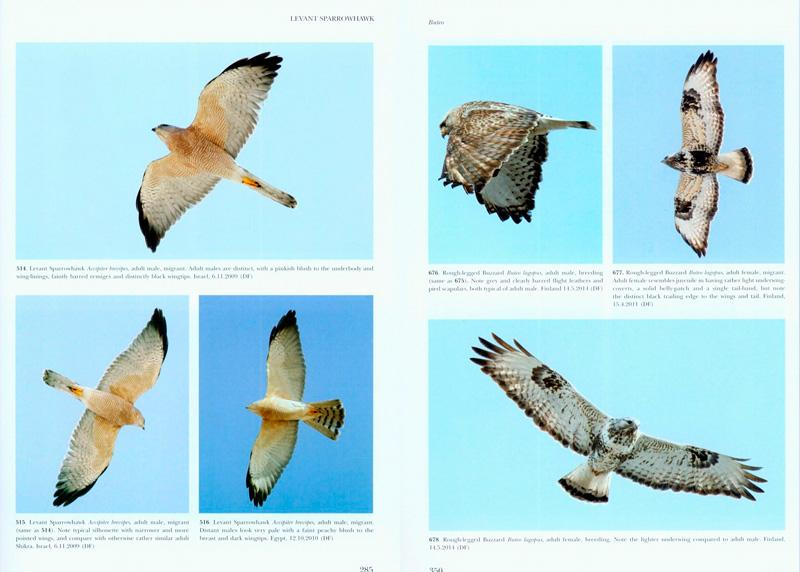 Raptors of Europe, North Africa and the Middle East